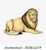 Pencil Drawing Of A Lying Lion