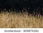 Savannah Grass Field In Sun...