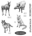 forest animals set. wolf  fox ... | Shutterstock . vector #303882989