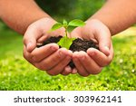 Green Plant In A Child Hands O...