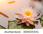Beautiful  Waterlily Or Lotus...