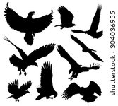 bald eagles silhouettes... | Shutterstock .eps vector #304036955