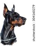 drawing doberman dog  portrait... | Shutterstock . vector #304160279
