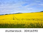 yellow field under blue sky | Shutterstock . vector #30416590