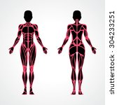 female muscular anatomy vector... | Shutterstock .eps vector #304233251