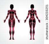 female muscular anatomy vector... | Shutterstock .eps vector #304233251