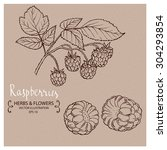 raspberry  hand drawn vector... | Shutterstock .eps vector #304293854