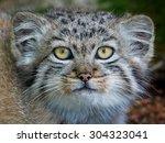 Closeup Portrait Of A Juvenile...