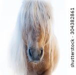 Palomino Horse Face With Shagg...