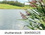 Landscape In Lake