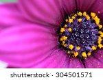 purple flower | Shutterstock . vector #304501571