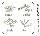 various herbals used for making ... | Shutterstock .eps vector #304573139