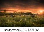 farmland summer scene in sunset | Shutterstock . vector #304704164