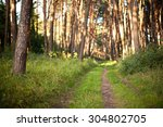 The Path In The Forest. Shallo...