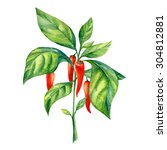 Watercolor Painting Of Peppers...