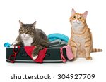 two striped cat lying with a... | Shutterstock . vector #304927709