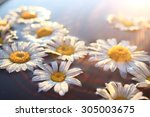 Chamomile Background Nature
