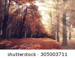 the path in the autumn forest | Shutterstock . vector #305003711