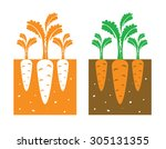 carrot plant with leaves and... | Shutterstock .eps vector #305131355