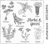 vector hand drawn set with... | Shutterstock .eps vector #305136941