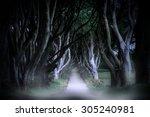 dark hedges in armoy  northern... | Shutterstock . vector #305240981