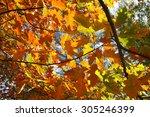 Autumn Leaves Against The Sky...