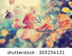 colorful foliage in the autumn... | Shutterstock . vector #305256131