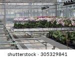 Modern flower nursery  - stock photo