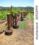 Attractive California vineyard with smug pots used to deal with frost - stock photo