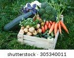 freshly harvested vegetables in ... | Shutterstock . vector #305340011