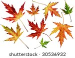 many different autumn leaves... | Shutterstock . vector #30536932