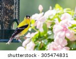 American Goldfinch By A Bird...