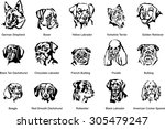 the face of a dog  breed dog ... | Shutterstock .eps vector #305479247