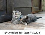 Stock photo two kittens playing 305496275