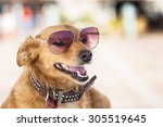 dog with sun glasses portrait... | Shutterstock . vector #305519645
