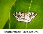 Small photo of Abraxas grossulariata butterfly on a large green leaf in the garden