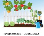 branches of apple with apples ... | Shutterstock .eps vector #305538065