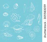 set with outline seashells | Shutterstock .eps vector #305583059