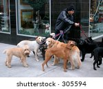 New York City Dog Walker In...