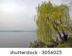 Willow Tree Near Lake Shore