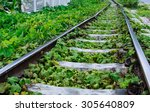 green plants growing by the... | Shutterstock . vector #305640809