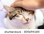 Hand Of Person Stroking Head O...