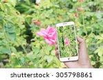 man hand taking photo rose... | Shutterstock . vector #305798861