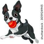 Illustration Of Boston Terrier...