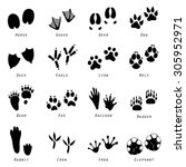 animal spoor footprints icon... | Shutterstock .eps vector #305952971