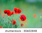 red poppies on field | Shutterstock . vector #30602848