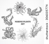 collection of marine plants ... | Shutterstock .eps vector #306035774