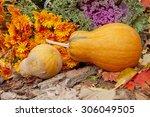 Two Orange Pumpkins ...