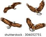 eagle  flying eagle  color ...   Shutterstock .eps vector #306052751