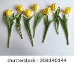 row of yellow tulips on white   Shutterstock . vector #306140144
